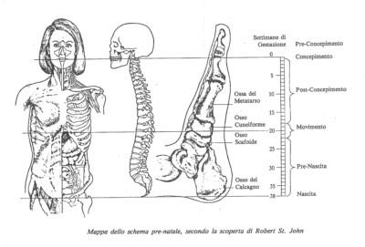 schema prenatale - pratica metamorfica